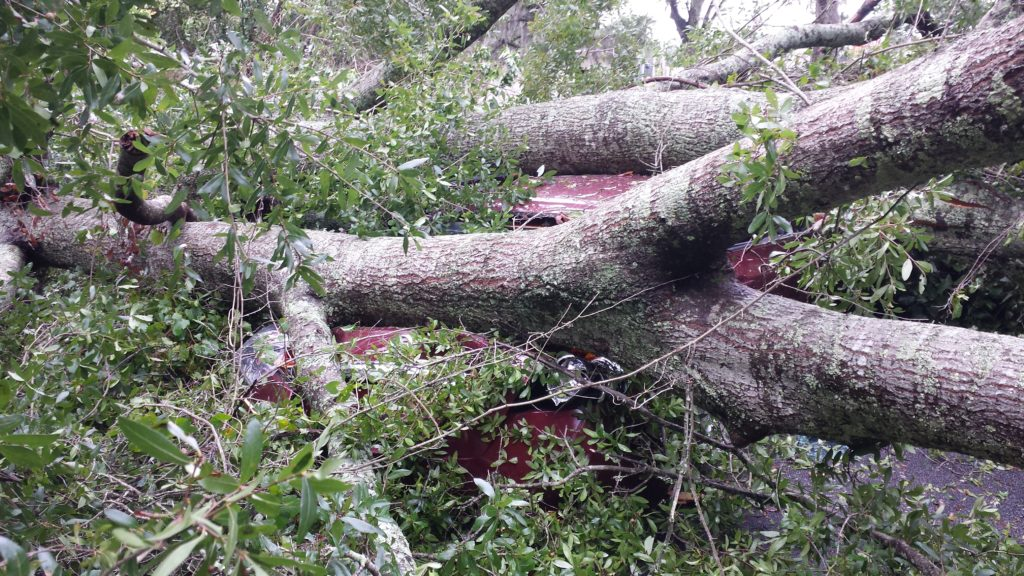 Tree on car hurricane perry florida
